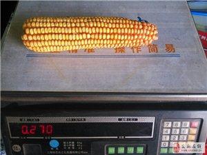 低价批发种子化肥