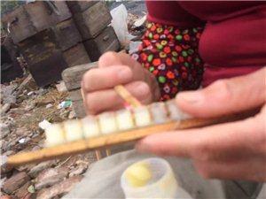 自家蜂产的蜂产品