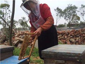 自家生产的蜂产品