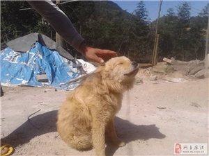 狗大量出售
