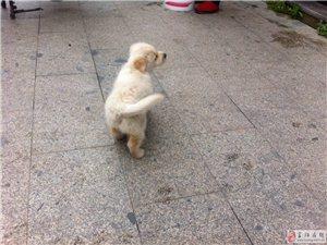 家�B新生狗狗