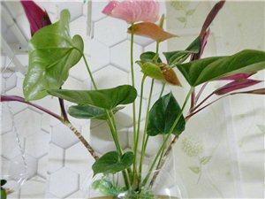 幸福像花儿一样,喜欢养花的一起交流