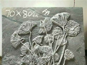 古生物化石