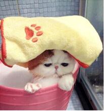 616看看天猫怎么洗澡!#猫狗爱洗澡#