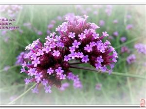 夏至时,等你,看一场姹紫嫣红