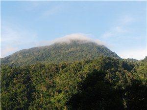 黎母山国家森林公园发现之旅(二)