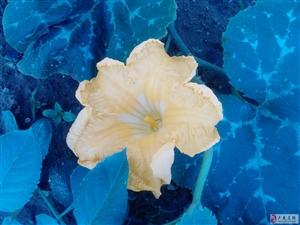 你最熟悉的花