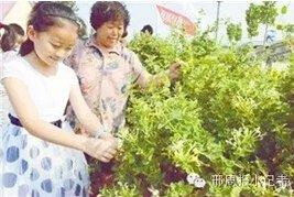 邢周报小记者澳门太阳城现金网宜采庄园活动侧记 一起过来玩吧!