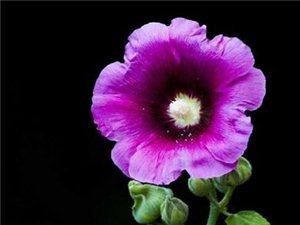 师院的小花,开的正艳