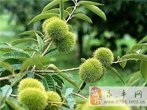 山竹 火龙果 腰果等名贵果子是怎么长出来的,长长见识吧!