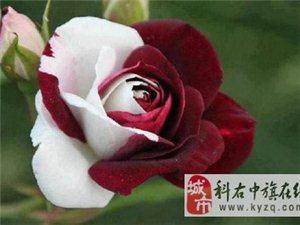 奇��花卉