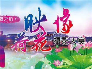 """""""荷之�•映像荷花""""�z影大�――中��・洪�珊�穆墩�u首�煤苫ü�"""