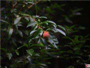 请问这是什么植物,东江源生态公园发现的