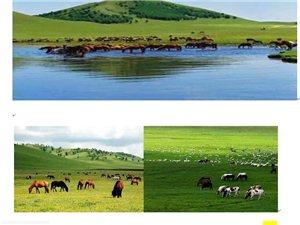 同样的假期、不一样的体验―相约大草原―夏令营五天