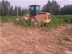 农民几十亩一级基准农田保护块被一夜之间推到,村民无处喊冤!!!