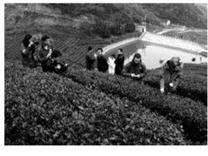 市摄影家协会为助推茶叶产业点睛
