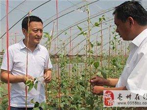 """亳州市青年科技奖获得者叶林:把生态农业装进""""菜篮子"""""""
