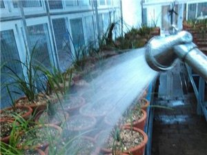给兰草浇浇水