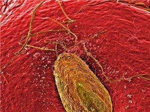揭秘显微镜下的奇异世界:沙粒也如此美丽