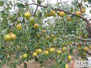 """山西隰县用""""五模式""""推进农业综合开发"""