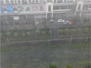 广场上暴雨如注,淡定哥悠闲漫步!