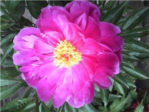 养花和育人――田桂民