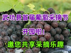 武功县首届葡萄采摘节报名开始啦!