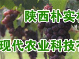 陕西朴实朴食现代农业