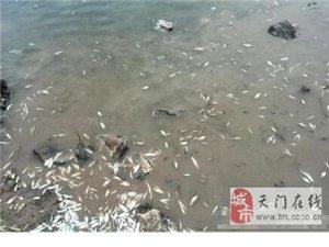江夏�^水�旄浆F死�~