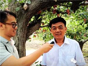 """?澳门大小点娱乐""""梨王""""程盼安讲他的梨树!"""