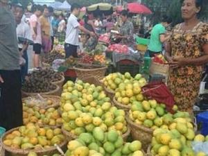 缅甸芒果正在寻求向美国出口