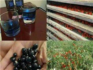 出售黑、红枸杞,枸杞蜂蜜及青藏特产,送货上门!