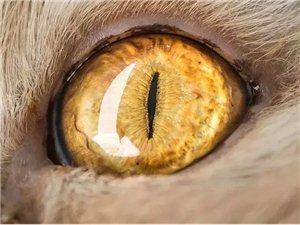 『微距摄影』猫之眼
