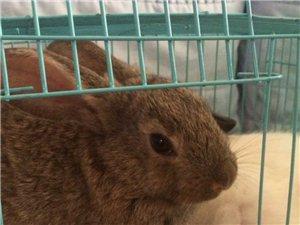 兔兔是那么的可爱