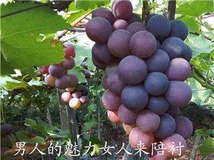 ★★自家种的纯天然葡萄下架,品种多样,口感甘甜★★