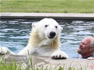 美国驯熊世家养13头熊当宠物 朝夕相处如家人