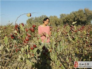 新疆的10月