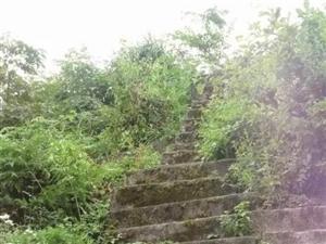 桐梓县夜郎镇发现神秘古堡,城墙巧妙藏于深山悬崖,修建年代和原因成谜