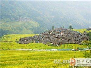 从江:水稻扮靓美丽乡村