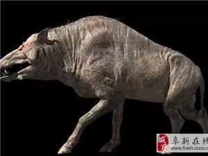 古代的猪竟然长这样,最后一只你绝对震惊