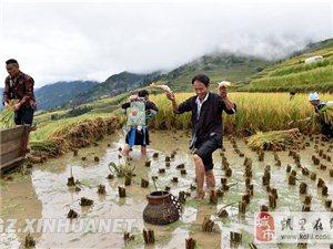 """贵州从江:""""全球重要农业文化遗产""""助?#39057;?#22320;经济发展"""