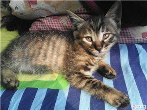 可爱小猫出售