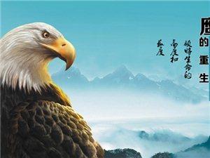 鹰的重生,感悟人生的高度