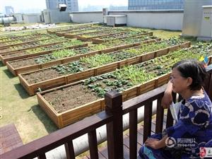 武汉人真会玩!空中建农场   都市人上房忙摘菜
