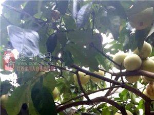 柚子的另一吃法:柚子酒(�D)