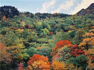 秋天的北海道!!!!美翻了