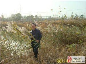 谁是画坛鸭王?画家刘志红花鸟画作品欣赏(组图)