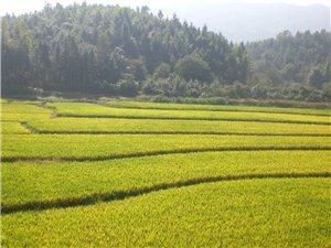 修建中的昌栗高速�f�d至上高段�L景照片