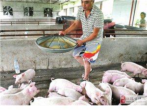 拟建138个年出栏千余头生猪养猪场