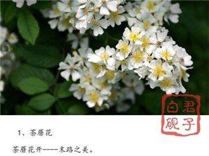 世界十大凄美之花,十种花十个故事。 一起涨知识!